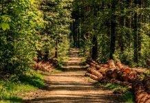 concessao-florestal