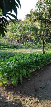 fazenda-allianca-gastronomia